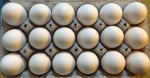 eggs.18